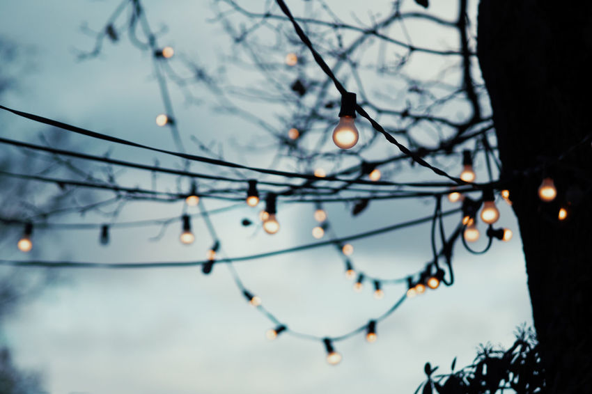 Tree Focus On Foreground Dusk No People Nature Plant Low Angle View Branch Lighting Equipment Illuminated Sky Decoration Close-up Outdoors Bare Tree Beauty In Nature Selective Focus Connection Hanging Electricity  Light Christmas Lights Christmas Decoration Capture Tomorrow