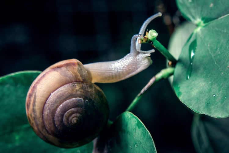 Animal Animal Antenna Animal Body Part Animal Shell Animal Themes Animal Wildlife Animals In The Wild Close-up Crawling Focus On Foreground Gastropod Invertebrate Leaf Mollusk Nature No People One Animal Plant Part Shell Snail Spiral