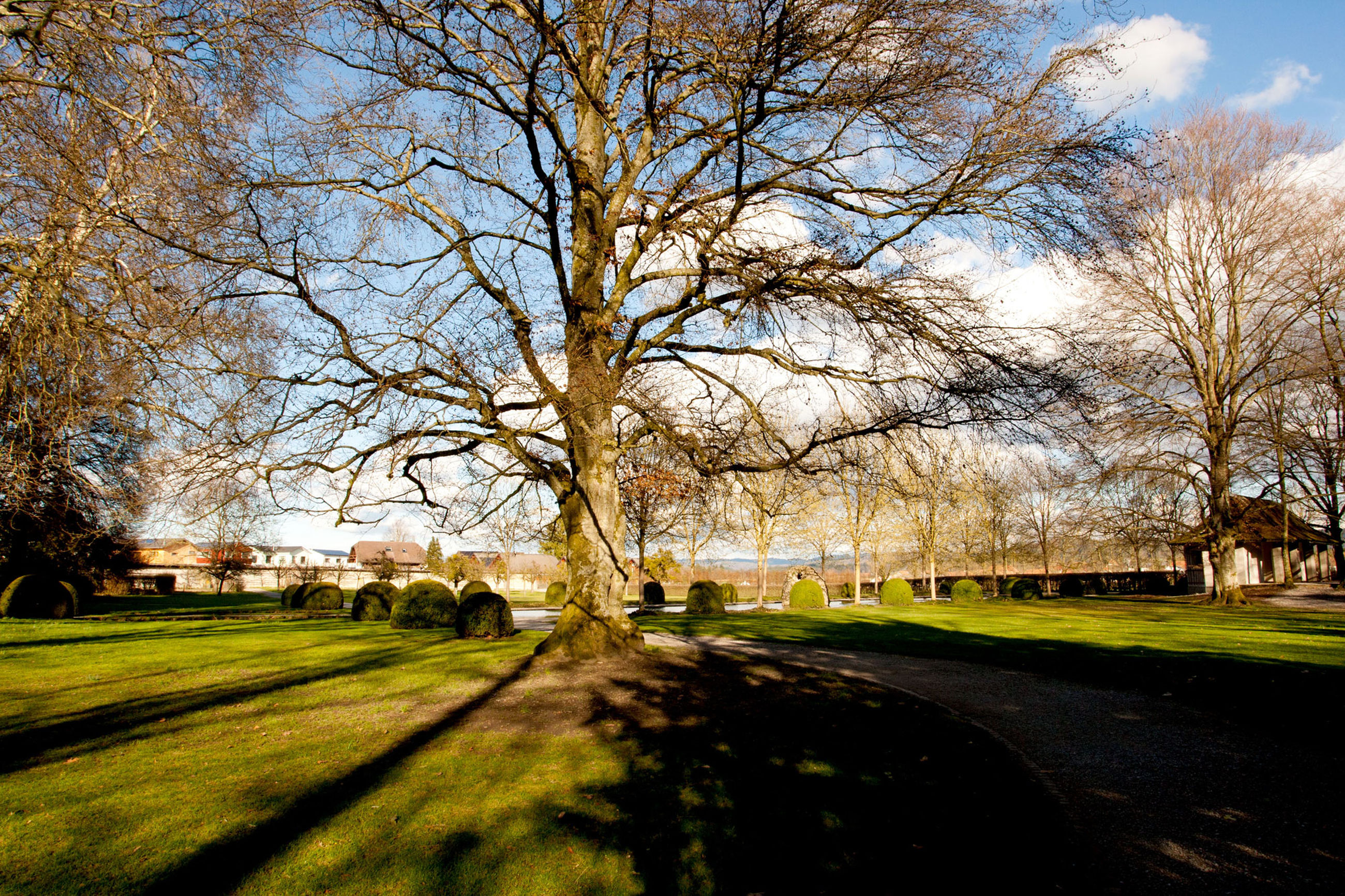 tree, plant, nature, grass, sky, sunlight, bare tree, day, park, beauty in nature, shadow, outdoors, no people, park - man made space, tranquility, branch, scenics - nature, architecture, land, landscape