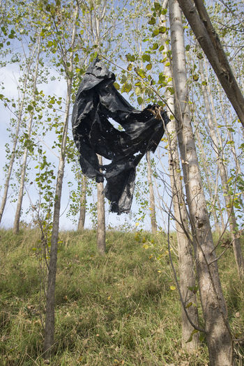 EyeEmNewHere Amager Fælled Colors Plastic Bag Urban Nature Black Color Contrasts Forest No People Plastic Pollution Sunny Day Tree Trunk
