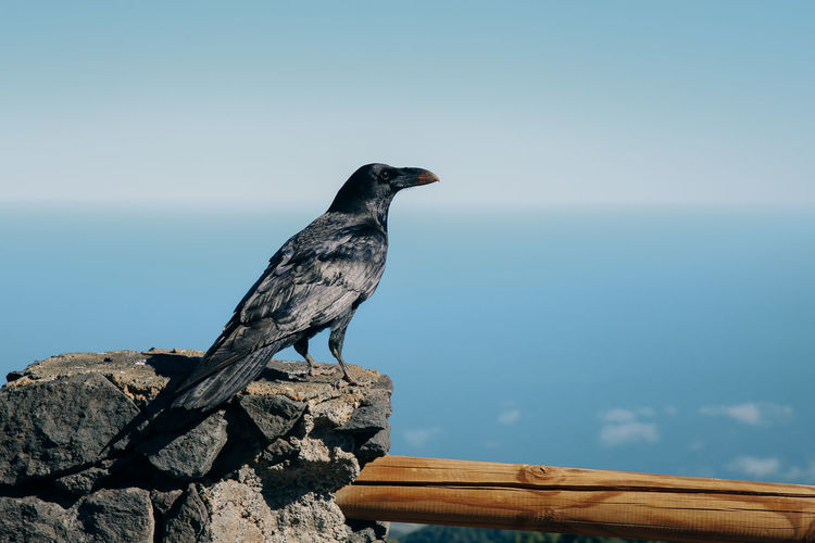 Bird perching on rock against sky