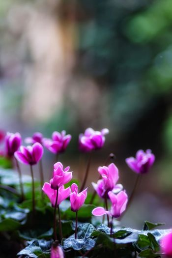 No People No Person Day Flower Head Flower Pink Color Springtime Arts Culture And Entertainment Close-up Plant Landscape Flowering Plant In Bloom Pollen Plant Life Blooming