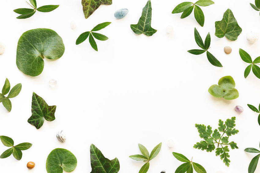 Spring green leaves arrangement on white background. Copy Space Freshness Nature Above Arrangement Backgrounds Close-up Compositions Frame Freshness Green Color Growth High Angle View Indoors  Ivy Leaf No People Plant Springtime Stones Studio Shot Summer White Background White Color
