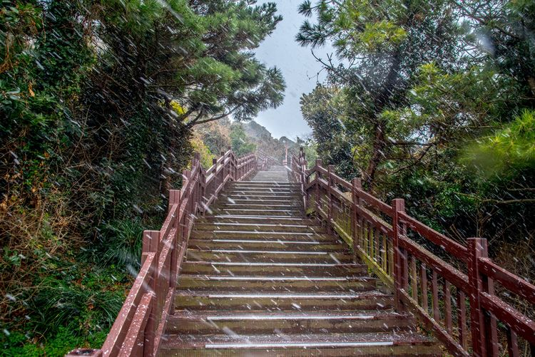 Steps And Staircases Staircase Steps Tree Nature Outdoors No People Day Beauty In Nature Sky