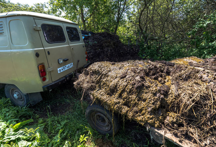 Russia, Tver region, cow manure-the best fertilizer for plants Russia Abandoned Car Cow Manure Day Field Forest Grass Growth He Best Fertilizer For Plants Land Land Vehicle Mode Of Transportation Motor Vehicle Nature No People Off-road Vehicle Outdoors Plant Stationary Transportation Travel Tree