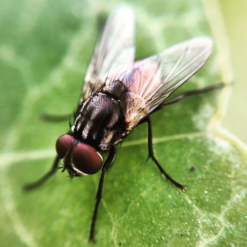 Closeup- Fly