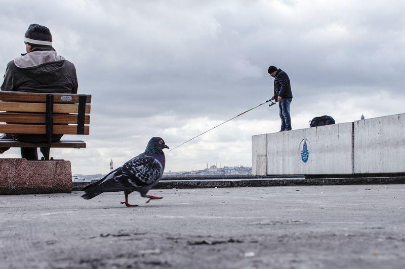 Bird on men against sky