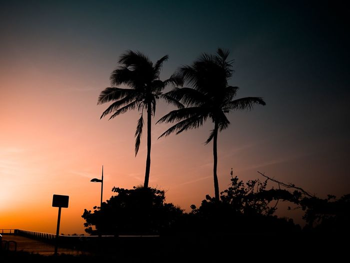 Silhouette Sky Sunset Palm Tree Tree Plant Tropical Climate Low Angle View Nature Orange Color Scenics - Nature Beauty In Nature Tranquil Scene Outdoors Dusk Clear Sky No People Growth Tranquility Street