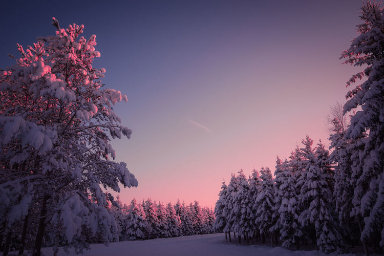 Candy color sunset Tree Beauty In Nature Winter Snow Nature Sky Cold Temperature Scenics - Nature Pink Color No People Tranquil Scene Tranquility Landscape Freshness Sunset Outdoors Pastel Colors Sunlight Frozen Clear Sky Day Arctic Photography Nature_collection Low Angle View