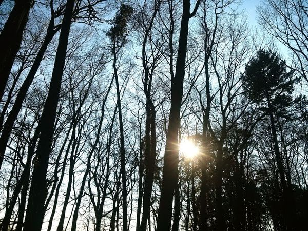 The Sun is Cold. · Rotenburg An Der Wümme Germany Trees Forest Hugging Trees Light And Shadow Silhouette Winter Sun Winter Day Clean Air Clear Sky
