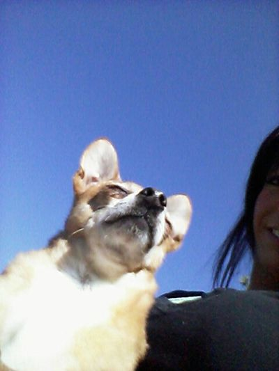 My little Diesel ..taking in all the Fresh Air... & Sunshine Hello World Dogs Outdoors Cheese!