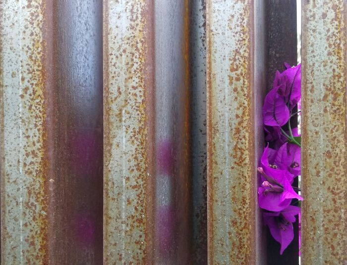 Metal and Flowers Backgrounds Purple Multi Colored Flower Full Frame Close-up Spain♥ Denia-valencia Colour Of Life Growth Purple Flower Beauty In Nature Vibe E Positividade ✌ Messing Around Peace ✌ Scenics Metal Fence Flowerporn