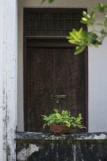 大门挂把铜锁,一家全都不在,只有午后阳光,照在盆里青菜。 leaves Plant Built Structure Potted Plant Flower Pot Leaves Wood Door Old Building  Sunny