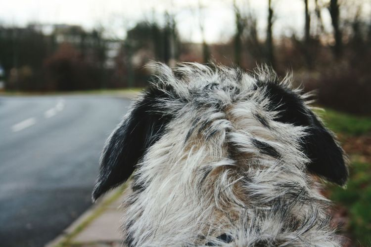 Taking Photos I Love My Dog❤ Dog❤ Dogwalk Irish Wolfhound I Love My Dog Four Legs And A Tail Cearnaigh Dogslife Dogs Of EyeEm My Dogs Are Cooler Than Your Kids Dog Of The Day Dogsofinstagram Dezember Autumn 2015 Taking Photos