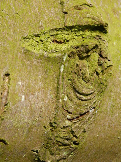 Happy tree man ... :-) Bark Texture Close-up Concentric Day Fairytales & Dreams Greatings Happy People Happy Time Hopes And Dreams Just Smile  Laughing Faces Man With Hat Nature Nature Art Nature Art Of Wood Nature Art Photography Nature Artwork Nature Collection No People Outdoors Smiling Face Smiling Man Tree Art Tree Man Wonderful Day