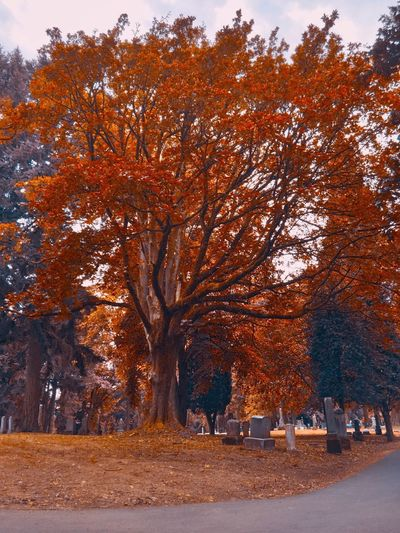 Cemetery Portland, OR Scenery Tree Autumn Plant Change Beauty In Nature Nature Orange Color Environment Scenics - Nature Land Landscape Outdoors Tranquil Scene Tranquility