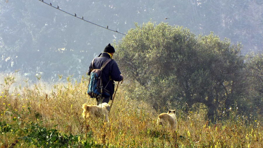 Rear View Of Man With Dogs Walking In Field On Sunny Day
