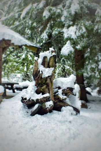 Snow Cold Temperature Winter Nature No People Day Outdoors Tree Beauty In Nature Close-up