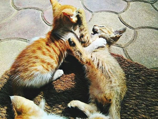 Q My kittens.. I find them having a healthy fight every now and then.. It's so much fun to watch someone quarrel like this.. EyeEmBestPics Eye4photography  EyeEm Best Shots Littlethingsinlife TheLetterQ ABeautifulWorld Everyday Lives Bestshot FirstOfAKind Life Quarrel QforQuarrel