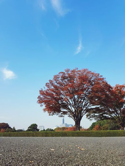 Sky Blue Outdoors Nature Beauty In Nature Tree Day No People Tokyo Imperial Palace Imperial Palace Garden Travel Destinations Tokyo, Japan