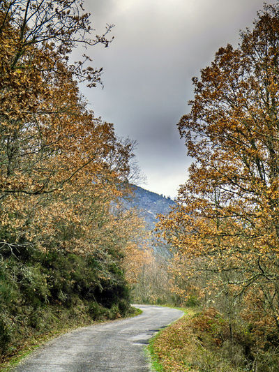 Tree Plant Direction The Way Forward Beauty In Nature Tranquility Road No People Sky Growth Autumn Nature Tranquil Scene Change Transportation Non-urban Scene Day Scenics - Nature Branch Outdoors