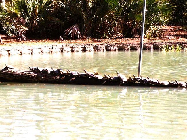 Turtles I ♥ Turtles