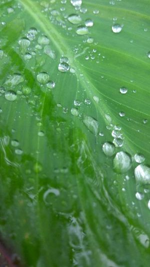 Green Color Extreme Close-up Full Frame Drop Nature Freshness Beauty In Nature Abstract Backgrounds Droplets Collection Wet Close-up Rain Drops