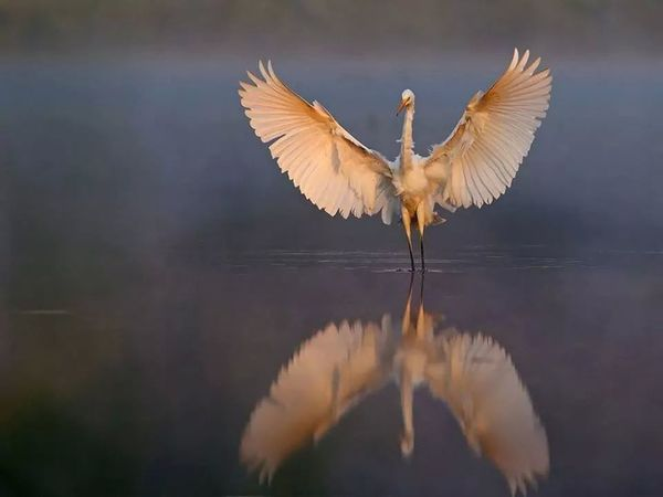 Wing Wings Of The Sky... Air Fly Timing Shot Perfect Amazing Magnificent Flying Nature Spread Wings Bird Outdoors Wings Awesome Perfection White
