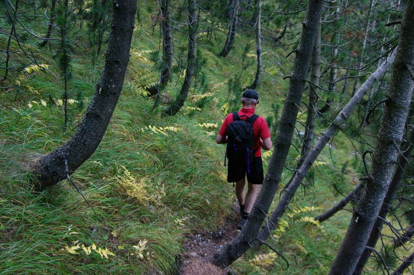 Adults Only Adventure Backpack Beauty In Nature Branch Day Footpath Forest Healthy Lifestyle Hiking Leisure Activity Lifestyles Men Mount Olympus Nature One Man Only One Person Outdoors People Real People Rear View Scenics Tree Tree Trunk WoodLand Young Adult Second Acts
