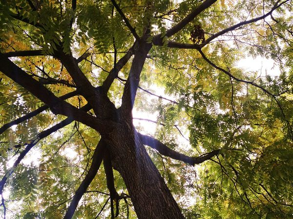 Tree Low Angle View Branch Growth Tree Trunk Tranquility Nature Tranquil Scene Scenics Beauty In Nature Day Green Color Green Outdoors Sky Non-urban Scene Tall Solitude WoodLand Growing