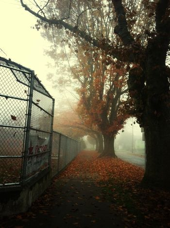 down by the schoolyard. Eye4photography Autumn EyeEm Best Shots Fog