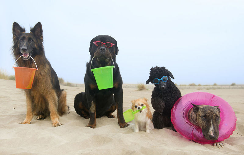 Dogs sitting at beach