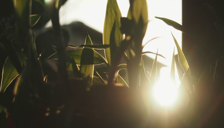 Sunrise View From Indoor Sunrise Plant Life Green Morning 日光