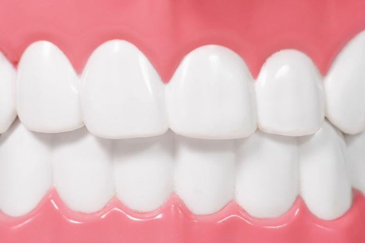 Close up dental model object Dental Model Dentist
