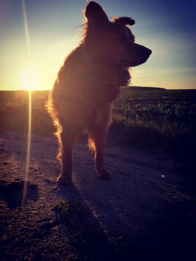 piękny, mroźny poranek :) My Dog Bestfriend Cold Temperature Beautyfulday Sunset One Animal Pets Sea Sky Outdoors Nature No People Animal Themes