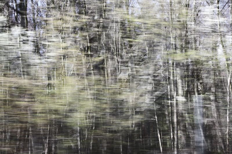 Abstract Abstract Photography ArtWork Blooming Tree Branch Drawing Driving EyeEm Diversity Fine Art Photography Forest Full Frame Green Idyllic Landscapes With WhiteWall Motion Rapid Scenics Softness Textured  Tree Unsharp White Woods
