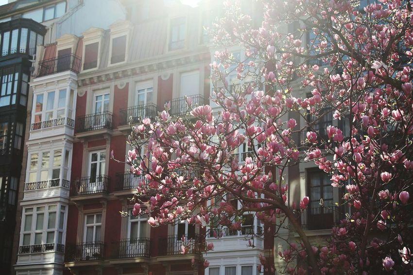 Urban Spring Fever Flowerporn At The Park Spring Bilbao Pastel Colors City Lights Enjoying Life Traveling