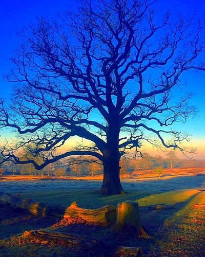 Tree Bare Tree Landscape Outdoors Branch Nature Beauty In Nature Blue Day Scenics Sky No People