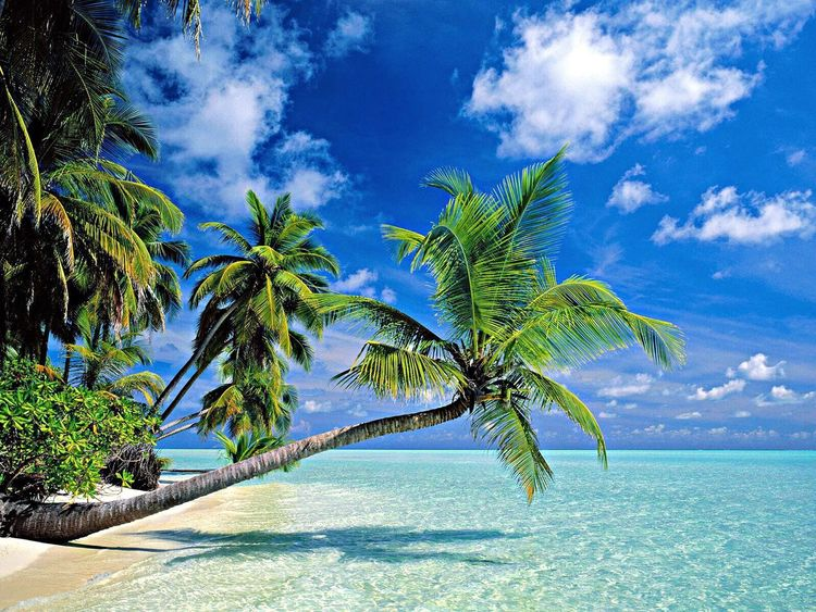 Palm Trees Loveit Summer Beautiful