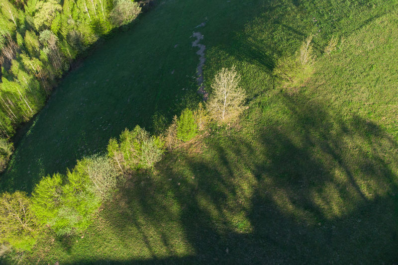 High angle view of trees on landscape