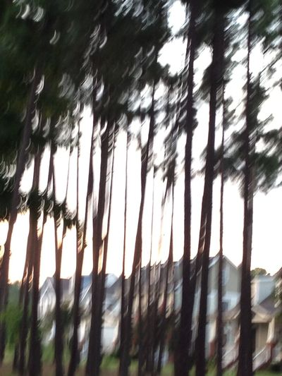 forest. for the trees. What you see yellow elevation on an on . Nem Trees Views From The Sidewalk How Near... How Far Let The Music Play