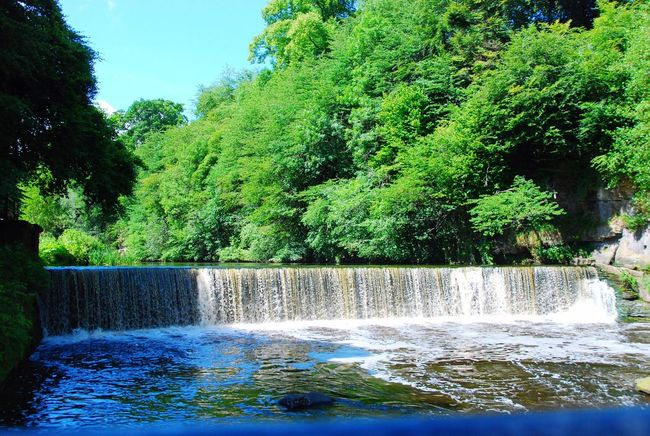 Cramond Edinburgh Scotland Tree Waterfall Nature Water River Beauty In Nature Scenics No People Outdoors Growth Forest Day Motion Green Color Sky