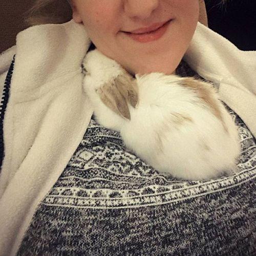 🐰💕😌 Bunny  Mypetiscutest Goodnight Iyigeceler