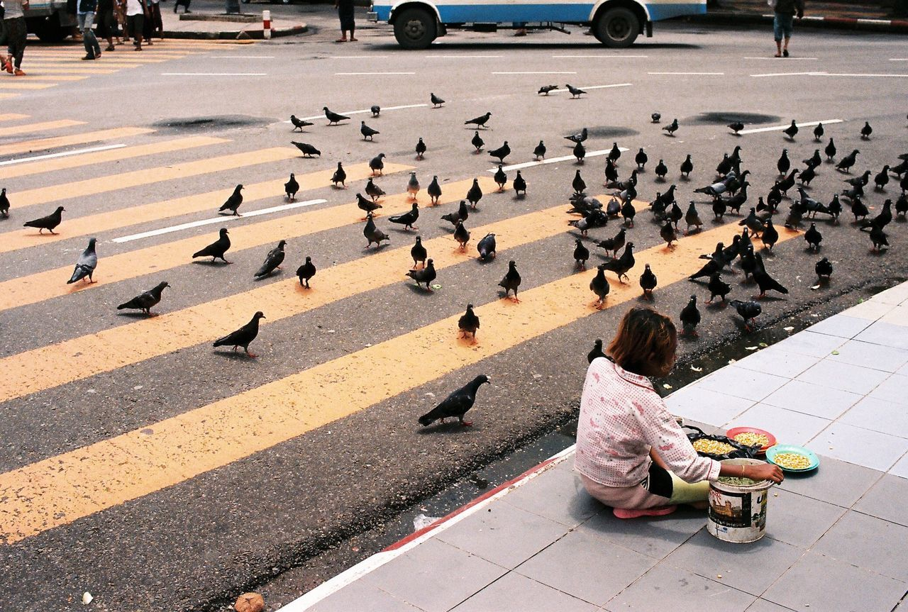 Rear view of girl sitting on sidewalk by pigeons on road