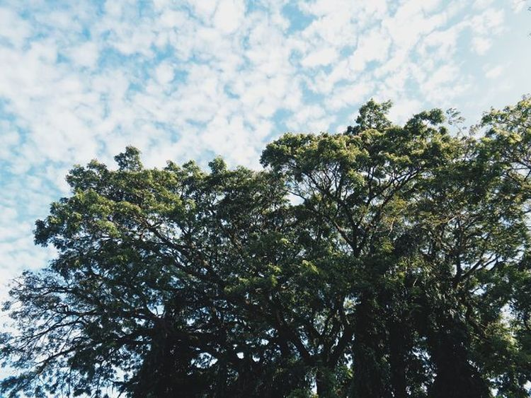 When I look up to the sky I feel freedom. VSCO VSCOPH Vscocam Vscodaily Instagram Instagramers Instadaily Inspic Vscosky Sky Trees Lfl L4l Fff F4F Freedom Instafamous