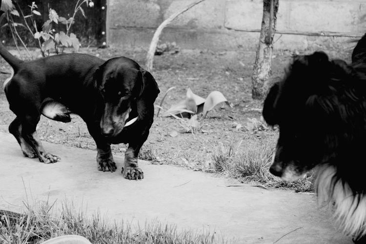 Washing Elephant American Bison Water Buffalo Bull - Animal African Elephant Tusk Cattle Farm Animal Domestic Cattle Animal Trunk Elephant Calf Calf Wyoming Western USA Horned Highland Cattle Grazing Herd Botswana Moose Taurus