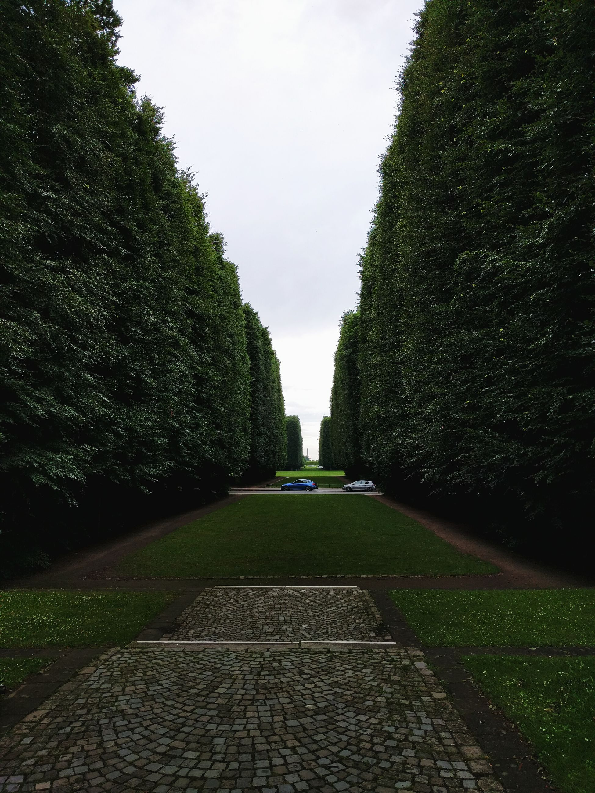 tree, the way forward, footpath, park - man made space, walkway, grass, formal garden, sky, green color, growth, pathway, diminishing perspective, park, nature, tranquility, day, outdoors, plant, empty, no people, lawn, travel destinations, tranquil scene, vanishing point, green