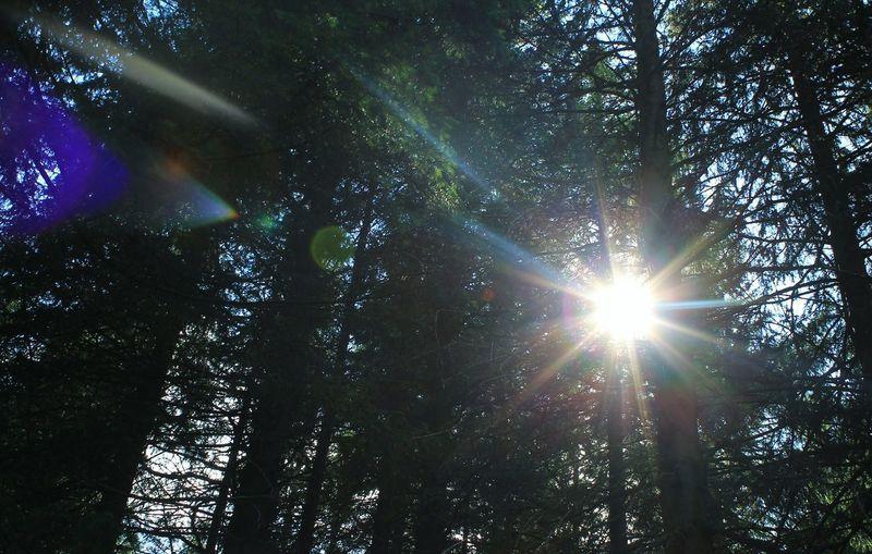 Forest Trees Nature Ukraine Carpathians Vorokhta Sunlight Sun Україна Говерла Ворохта Ліс