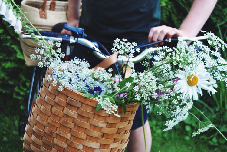 Close-Up Of White Flowers In Wicker Basket On Bicycle
