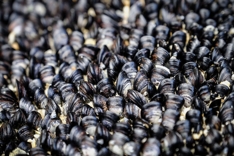 Full Frame Shot Of Mussels For Sale